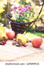 Autumn fruits - autumn harvest