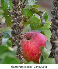 autumn fruits, southern Bohemia , Czech Republic