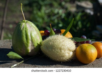 Autumn fruits and vegetables on a stone bench