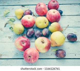 Autumn fruits/toned photo