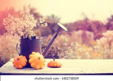 Autumn garden background with pumpkins/ thanksgiving day consept