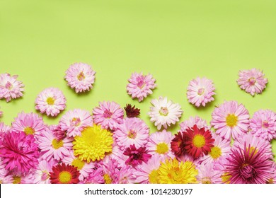 Autumn garden flowers over green backdrop background with copy space.