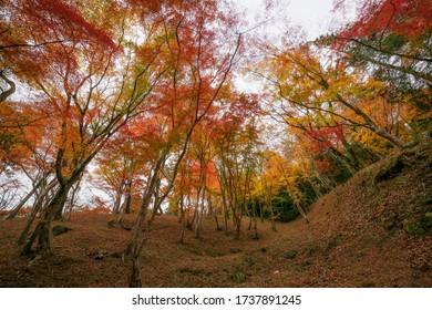 Autumn garden on little hill