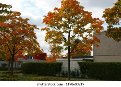 autumn in  Germany. autumn time in Ratingen, Düsseldorf