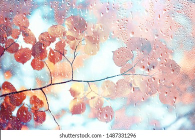 autumn glass rain landscape / abstract autumn view, wet weather, climate, glass