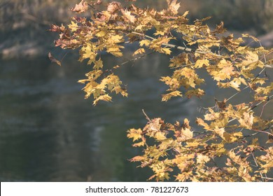 autumn gold colored leaves in bright sunlight in forest on dark blur background - vintage retro film look