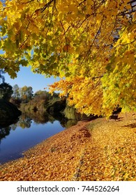Autumn gold trees next to the river