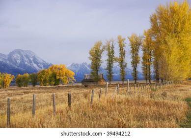 Autumn, golden aspens    Grand Teton National Park, Wyoming