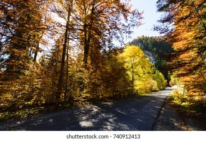 autumn golden foliage on sunny day on romanian  countryside