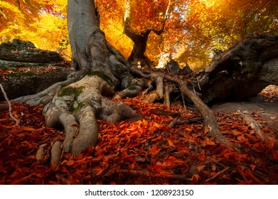 Autumn golden forest. Fantastic beech shot from a low point. The slopes of the mountain Demerdzhi in Crimea