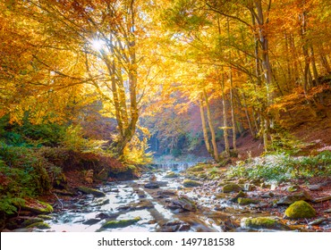Autumn in golden nature - vibrantl forest trees and fast river with stones, landscape