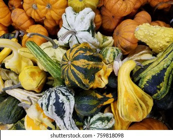 Autumn Gourds in Gorgeous Autumn Colors and Beautiful Shapes and Sizes, orange mini pumpkins, yellow and green squash. Fresh and local cornucopia.