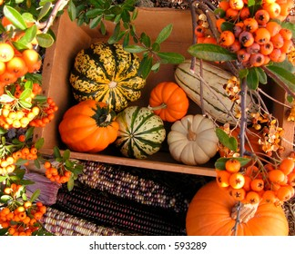 Autumn Gourds and Indian Corn