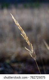 autumn grass bents against dark background in warm day. countryside
