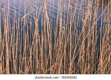 autumn grass bents against dark background in warm day. countryside - vintage film look