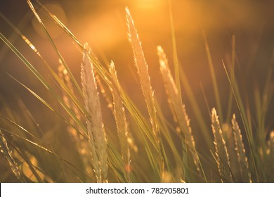 autumn grass bents against dark background in warm day in sunset light. countryside. golden sun - vintage film look
