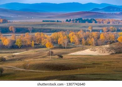 Autumn grazing scenery on Bashang Grassland in Wulanbutong
