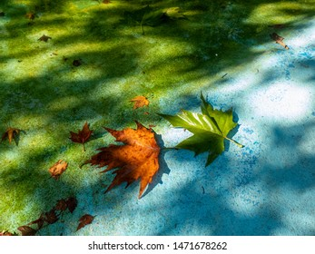 autumn. Green and yellow leaf on blue background next to blue water in warm light of morning sun