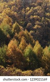 Autumn grove of mixed trees