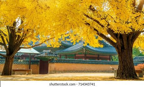 Autumn in Gyeongbokgung Palace,South Korea.