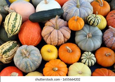 Herbsternte bunte Kürbisse und Kürbisse in verschiedenen Sorten.