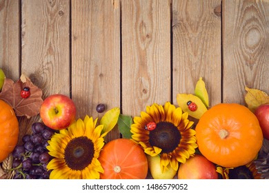 Autumn harvest concept with pumpkin, apples and sunflowers on wooden table. Thanksgiving holiday background. Top view from above