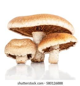 Autumn harvest of fresh woodland fungi with boletus mushrooms isolated on white background