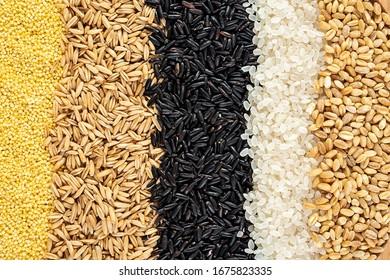 Autumn harvest of grain grain, full screen of whole grains  - Shutterstock ID 1675823335
