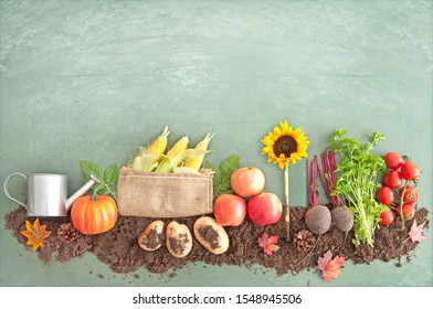 Autumn harvest on a chalkboard, with fruits and vegetables growing in compost including apples, potatoes and beetroot