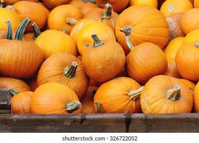 Autumn Harvest of Pumpkins in big wooden boxes on street market.