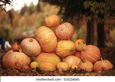 Autumn harvest of pumpkins halloween