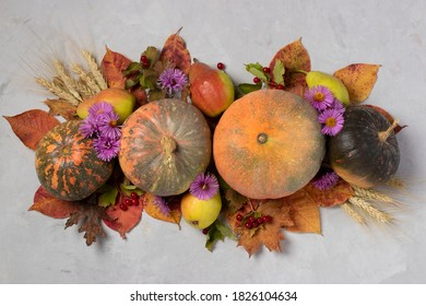 Autumn harvest: pumpkins, pears, leaves, viburnum, flowers and ears of wheat on gray background. Centerpieces Thanksgiving day. Top view