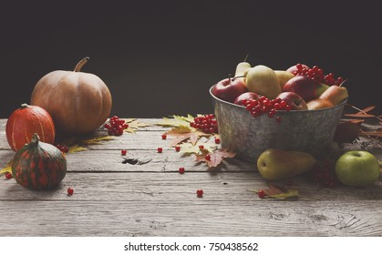 Autumn harvest and thanksgiving card background. Various pumpkins, rowan, apples in old metal basin and autumn leaves on weathered rustic wood with copy space
