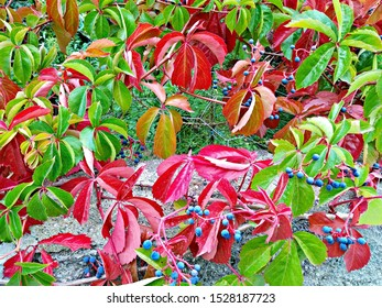 autumn has come, bright green, red, orange leaves - Shutterstock ID 1528187723