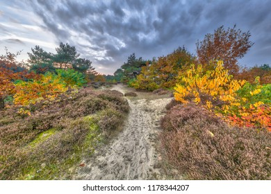 Autumn heathland landscape with colorful leaves on trees in Drenthe, Netherlands