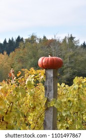 Autumn Heirloom Pumpkin on a Fence post