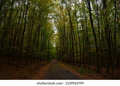 Autumn hike in Buchlov, Czech Republic