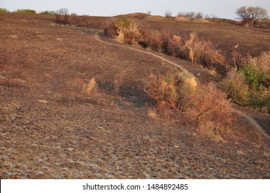 Autumn hill landscape of burnt ground and curved footpath between colorful bushes. Fall view of countryside in sunset light. Natural seasonal textures of dry grass and brown soil land.