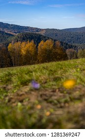 Autumn hilly or mountain landscape of Sumava National Park or Bavarian forest. Ble sky, colorful trees and green meadow.