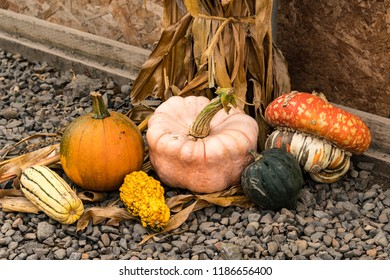Autumn Holiday Halloween Colorful Pumpkins and Gourds