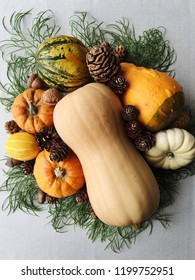 Autumn holiday still life with butternut squash, little pumpkins of different colours, pinecones, green branches and acorns. White background, house decorating