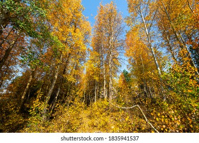 Autumn image of trees changing colors