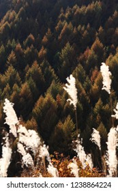 Autumn japanese larch forest