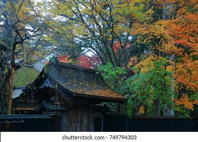 Autumn kakunodate