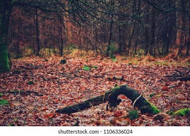 Autumn in Kampina, Netherlands