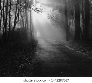 Autumn in Kiev on Trukhanov Island. Rays of light in the forest. Beautiful black and white ray of light.