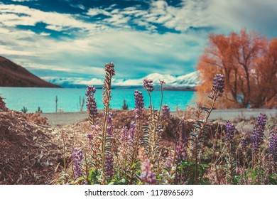Autumn in Lake Tekapo, New Zealand landscape