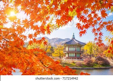 Autumn landmark at Gyeongbokgung palace with Maple leaves, Seoul, South Korea.
