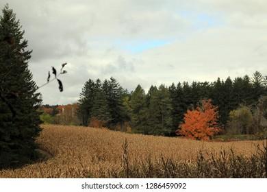 The autumn landscape