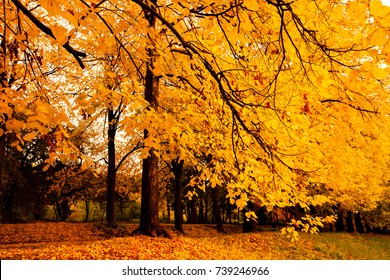 Autumn Landscape Background. Beautiful Autumn Landscape at sunset, Yellow Leaves Falling from Trees